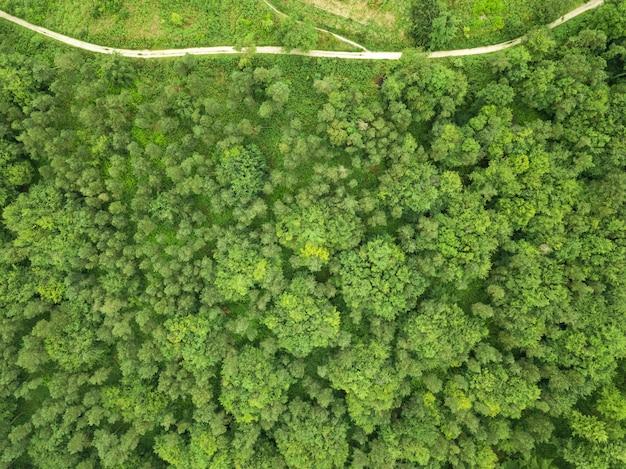 Zdjęcia lotnicze pięknego lasu z dużą ilością drzew w pobliżu pomnika hardy'ego w dorset, wielka brytania
