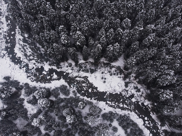 Zdjęcia lotnicze pięknych ośnieżonych sosen w lesie