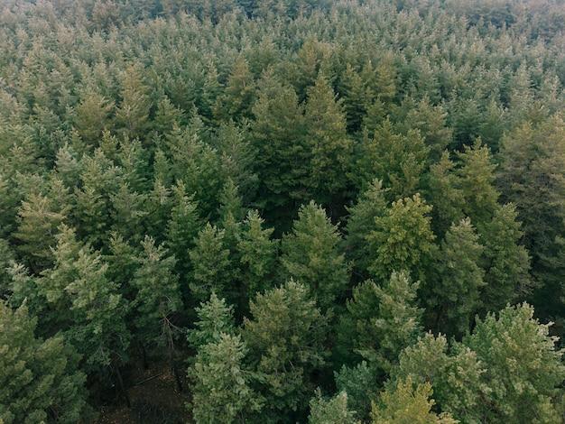Zdjęcia lotnicze z lasu sosnowego. ekologia wonderlust tło. wysokiej jakości zdjęcie
