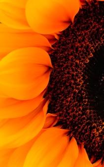 Zdjęcia makro części otwartej głowy słonecznika