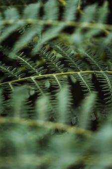Zdjęcia makro gałęzi paproci