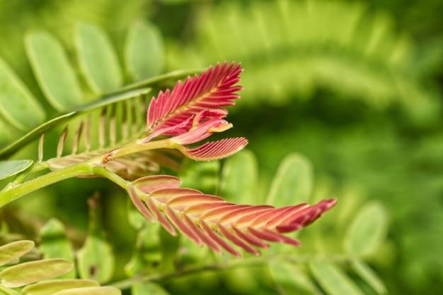 Zdjęcia makro pięknej świeżej rośliny z zielonymi i fioletowymi liśćmi w krzaczastym ogrodzie