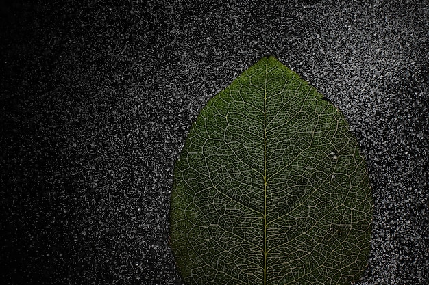 Zdjęcia makro płatka kwiatu z plamami i kroplami wody. tekstura liścia i płatka na tle rozmazanych plam.