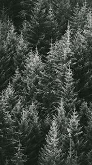 Zdjęcia makro sosnowego lasu