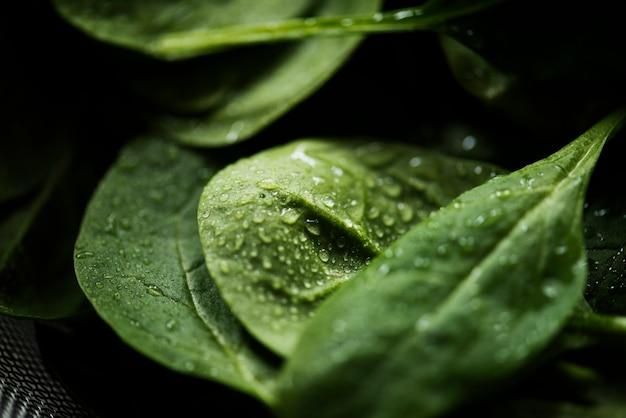 Zdjęcia makro świeżych liści szpinaku