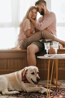 Zdjęcie białego labradora z szalikiem na szyi, leżącego na tle jego panów. para kochanków siedzi na parapecie.