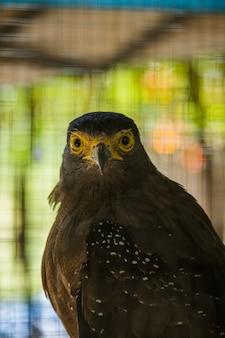 Zdjęcie bido snake eagle w zrównoważonym białym pustynnym zoo jantho aceh besar