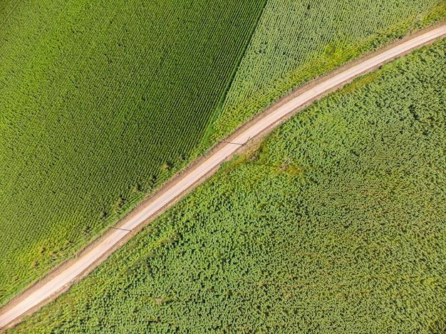 Zdjęcie drona z kukurydzy w okresie letnim w hiszpanii