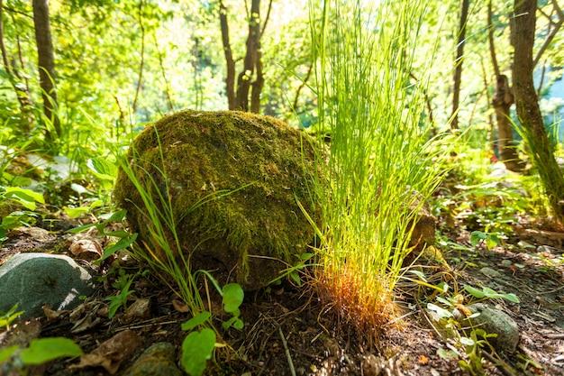 Zdjęcie dużej skały z trawą rosnącą wokół lasu
