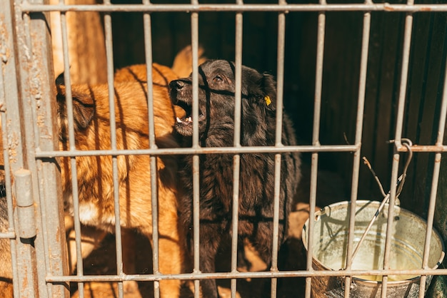 Zdjęcie dwóch psów w schronie za kratami.
