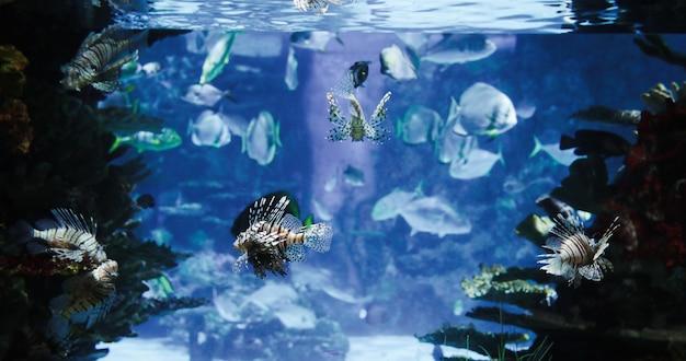 Zdjęcie grupy ryb morskich pływających pod wodą