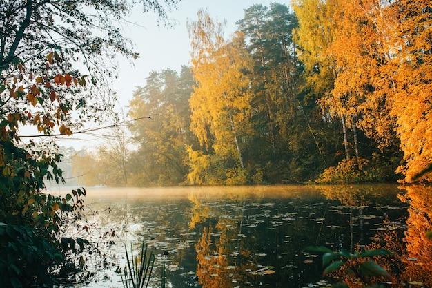 Zdjęcie jesiennych drzew i stawu