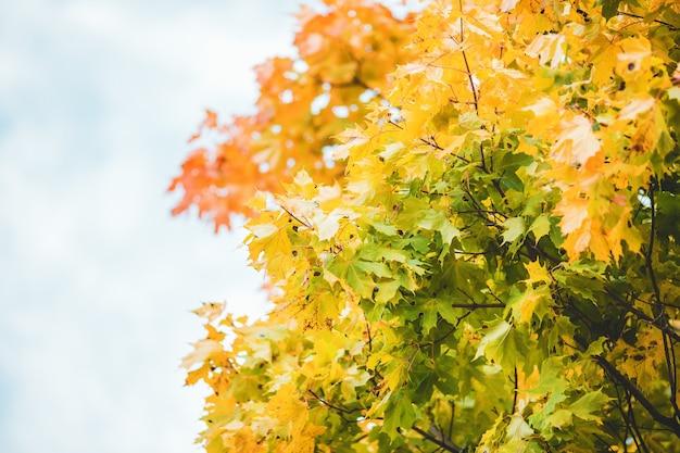 Zdjęcie jesiennych drzew na tle zachmurzonego nieba