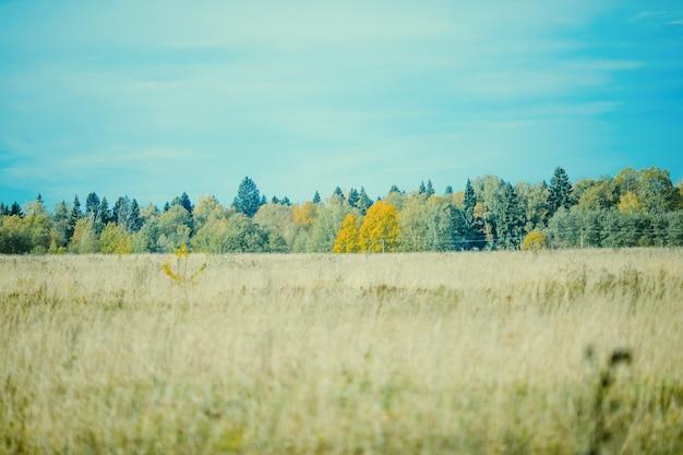 Zdjęcie jesiennych drzew, zielone pole