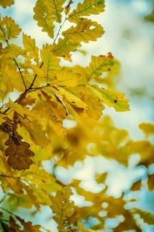 Zdjęcie jesiennych liści na rozmytym tle