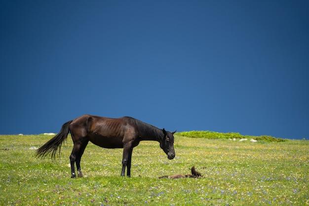 Zdjęcie konia i źrebaka na zielonym trawniku