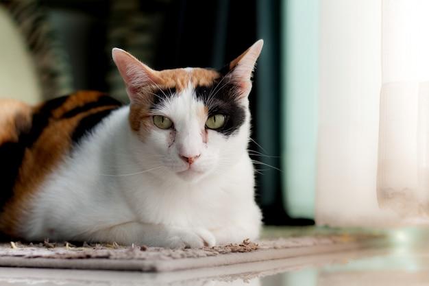 Zdjęcie kot leżący na dywanie patrzy na mnie.