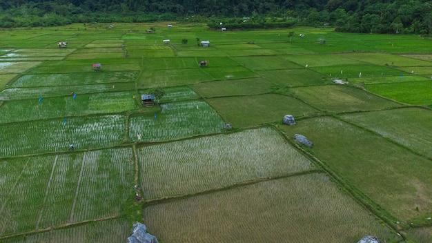 Zdjęcie krajobrazu pola ryżowego we wsi brayen aceh besar dystrykt aceh indonezja