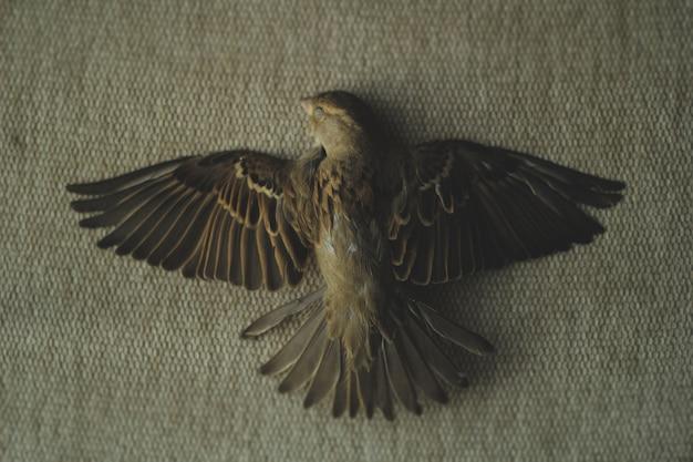 Zdjęcie martwego wróbla
