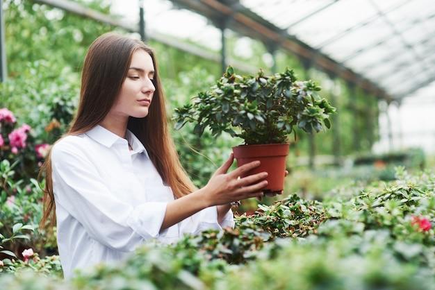 Zdjęcie młodej dziewczyny piękne dbanie o rośliny w szklarni.