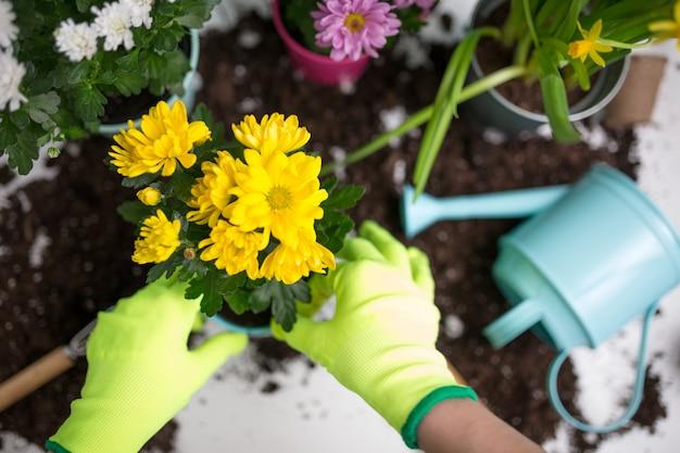 Zdjęcie na rękach mężczyzny w zielonych rękawiczkach przesadzających kwiat
