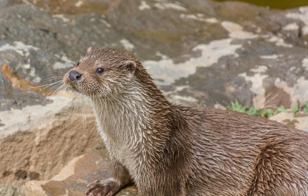 Zdjęcie pary wydr