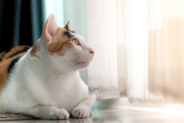 Zdjęcie perkalu kot leżący portret na dywanie szuka czegoś za drzwiami.