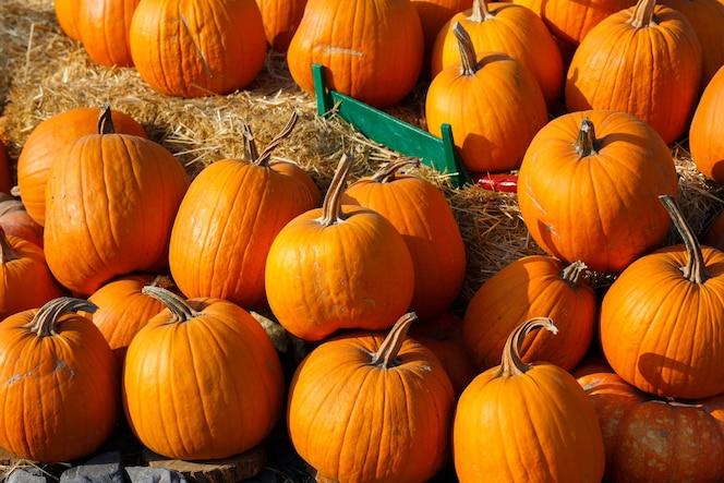 zdjęcie piękne dynie na rynku lokalnym rolnik odkryty w słoneczny jesienny dzień.