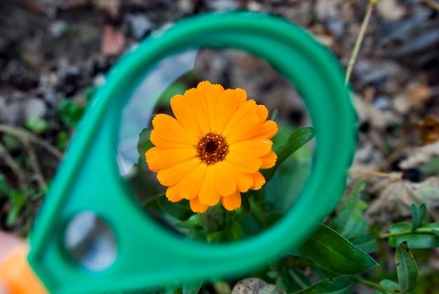 Zdjęcie pięknego kwiatu pomarańczy przez szkło powiększające