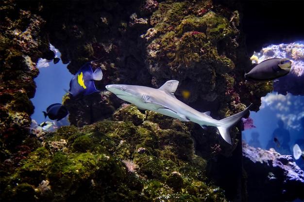 Zdjęcie podwodne rekina na otwartej wodzie