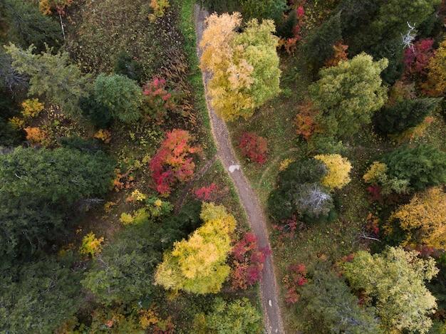 Zdjęcie ścieżek w lesie jesienią
