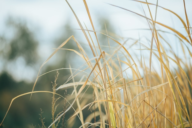 Zdjęcie suchej żółtej trawy na rozmytym tle