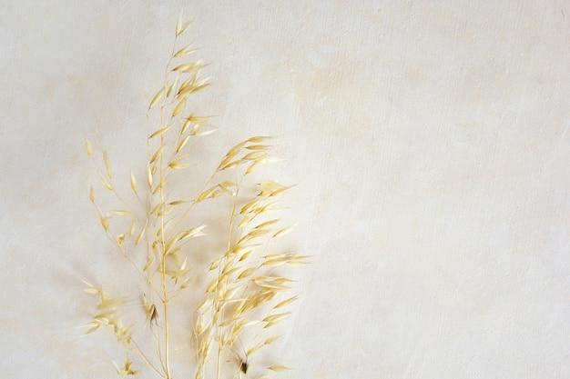 Zdjęcie suszonej rośliny. minimalne botaniczne liście zielnika. fotografia na beżowym pastelowym tle. kopiuj przestrzeń