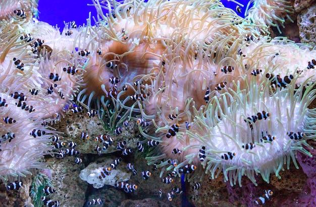Zdjęcie tropikalnej ryby na rafie koralowej