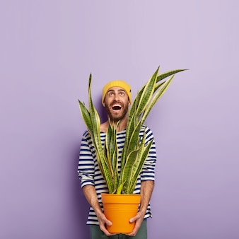 Zdjęcie uśmiechniętego zadowolonego mężczyzny skierowanego w górę, trzymającego garnek sansevierii, ubranego w sweter w paski, ma pozytywny wyraz, odizolowane na fioletowym tle.