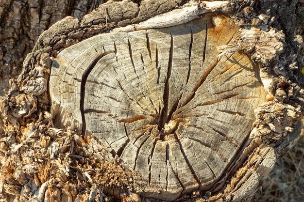 Zdjęcie z bliska odgałęzienia kory drewna. tło dla przemysłu drzewnego.