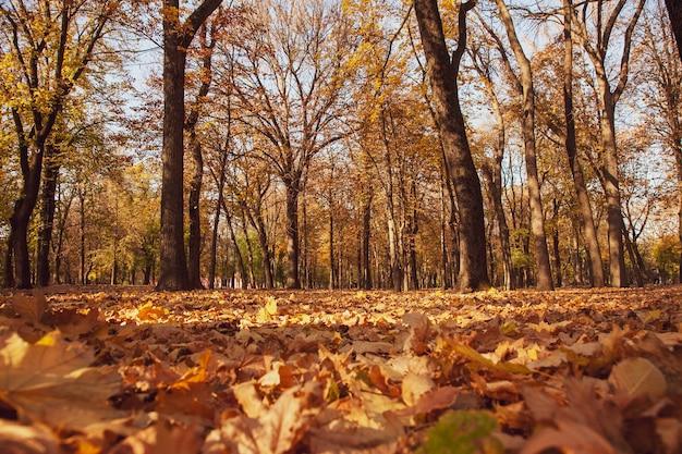 Zdjęcie z ziemi jesiennego parku z opadłymi liśćmi i słonecznym światłem zachodu słońca