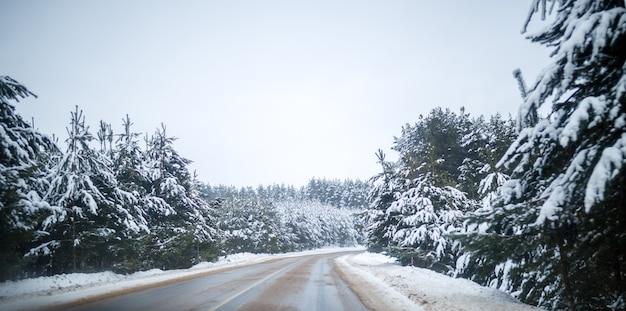 Zdjęcie zimowej drogi z drzewami w śniegu w dzień