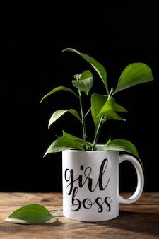 Zdrowa roślina w kubku dziewczyna szefa
