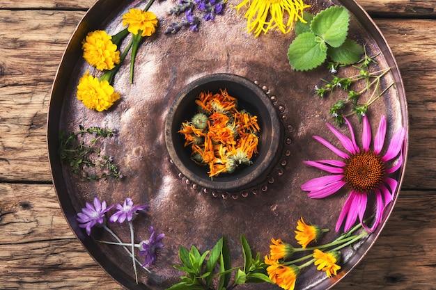 Zdrowe zioła i kwiat
