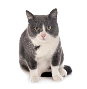 Zdziczały kot przed białą powierzchnią