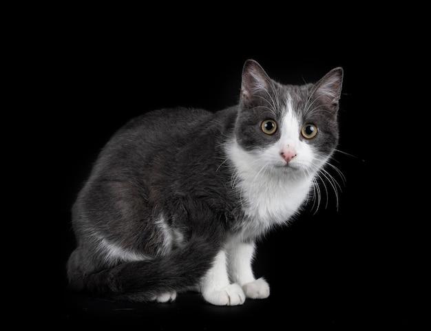 Zdziczały kot przed czarną powierzchnią