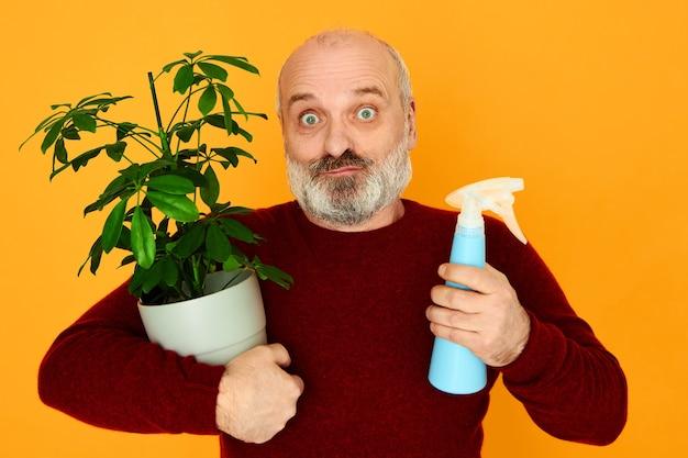 Zdziwiony przystojny, nieogolony emeryt, mężczyzna w dzianinowym swetrze, pozuje odizolowany, z doniczką i butelką z rozpylaczem w rękach, uprawia i pielęgnuje ozdobne rośliny doniczkowe. koncepcja wieku i hobby