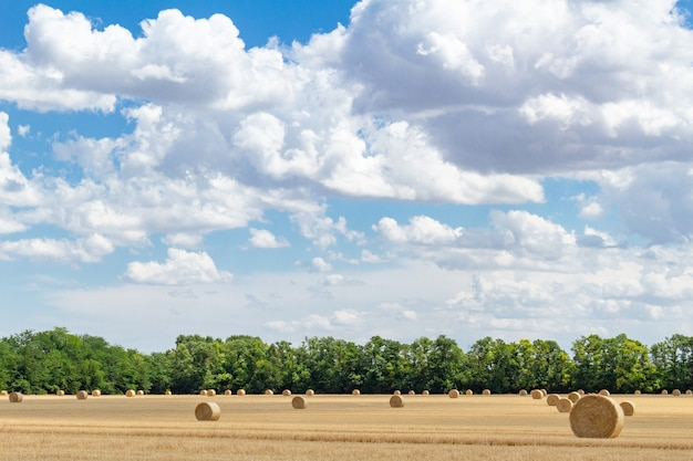 Zebrane ziarno pszenicy jęczmień pszenica żyto, ze stogami siana bele słomy kołki okrągły kształt