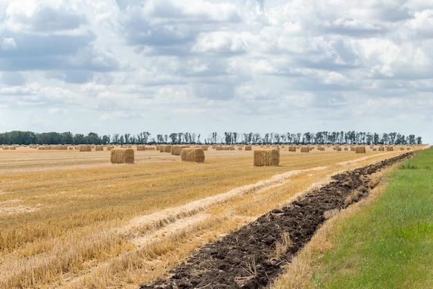Zebrane ziarno zbóż pszenica jęczmień pole żyta ziarno, ze stogami siana bele słomy słupki sześcienny prostokątny kształt