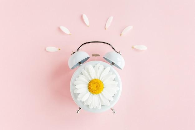 Zegar kwiat rumianku na różowym tle