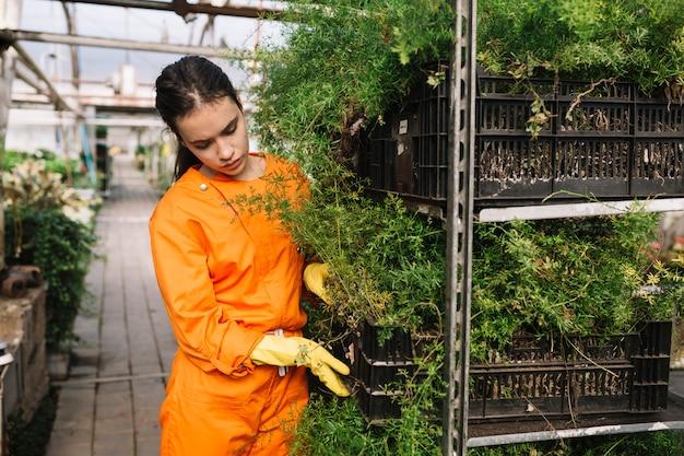 Żeńska ogrodniczka egzamininuje rośliny przy szklarnią w workwear
