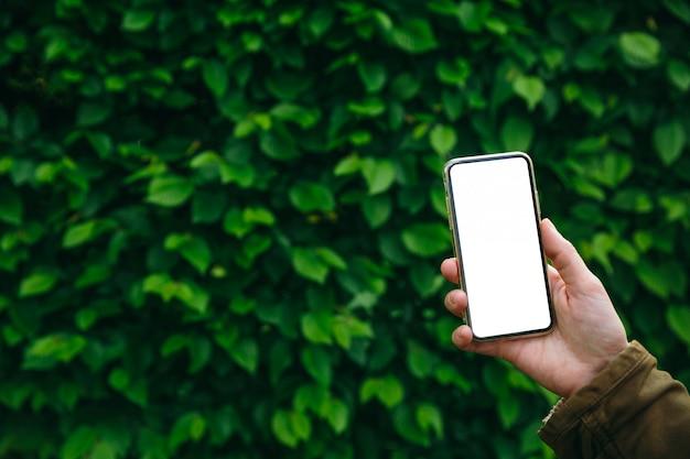 Żeńska ręka trzyma bielu ekranu smartphone na zielonym ulistnienia tle