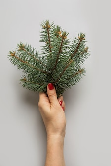 Żeńska ręki mienia choinka rozgałęzia się na szarość. xmas kartkę z życzeniami.