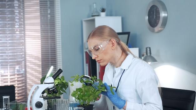 Żeński badacz patrzeje na roślinie pod powiększać - szkło